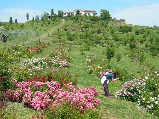 Innamorati Dei Giardini Storici Italiani Innamoratidellacultura